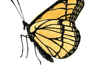 monarch butterfly original watercolor painting