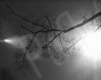 Rays of Sun Through Tree Branches in Black and White, Cemetery in Indiana Photograph Print