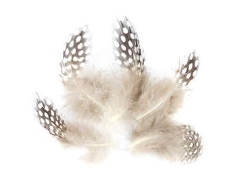 x 20 small 5 to 8cm natural Guinea fowl feathers