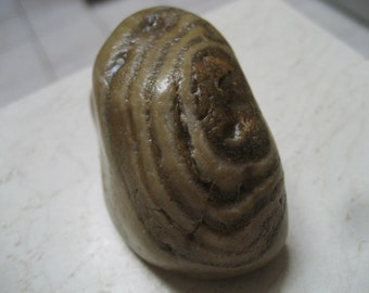 Petrified Oak Tree Rock Earth Mineral Stone Fossil-  Mother Nature Polished Earth TREE Stone -Deformed FOSSIL ROCKS -Odd Energy Stones