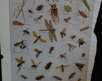 Vintage Webster's New International Dictionary Illustration Insects
