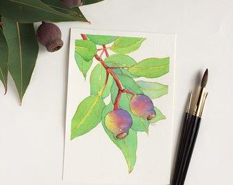 Gumnuts original watercolour painting on paper A5, flora botanical art, Australian gift for nature lover, gum tree branch, eucalyptus