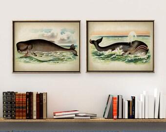 WHALE Print SET of 2, Whales Poster, Marine Decor, Nautical Art, Seal Life, Marine Life Print, Beach Home, Coastal art, unframed art