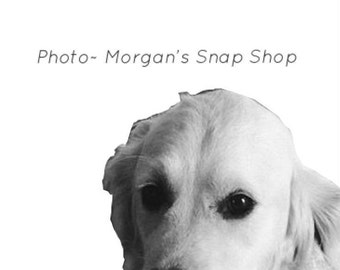 "B&W ""Magee the dog"" ~ digital download"