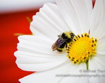 bee flower red white yellow macro landscape garden home fine art photography