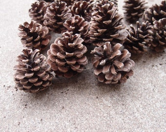 Red Pine Cones Lot Twenty Large Instant Collection Christmas Holidays Decor Cottage Cabin Rustic Wedding Decor