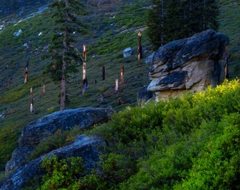 Pine Trees at Glacier Point by Catherine Roché, Yosemite National Park Photography, California Forest Photography, Wilderness, Fine Art