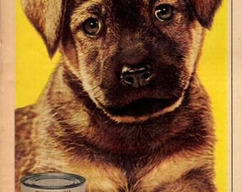 """1955 Dash dog food """" Because he needs you"""" vintage magazine ad"""