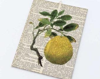 Lemon fruit dictionary Canvas board-kitchen wall art-lemon fruit canvas panel-vintage fruit wall art-fruit wall art-by NATURA PICTA CB025