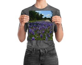 Carizo Plains Super Bloom
