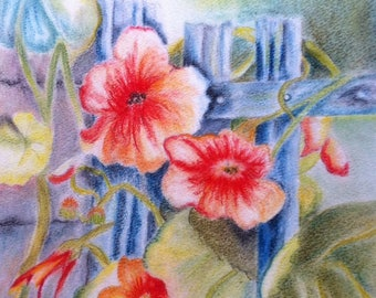 Bindweed red on the fence - PASTEL 32 * 41 CM