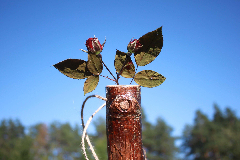 Wood log vase birch tree air plant holders weed pot stick pot zoom reviewsmspy