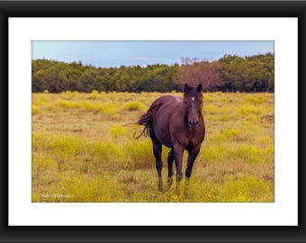 A Fine Art Print of a Horse in Field in Texas, Ranch, Texas, Horse, Field, Photograph