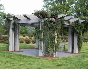 Pergola, Roses, Patio with pergola, Rose Garden, printable, Large Pergola, Rose Vines, Print, Red Roses, Home Decor