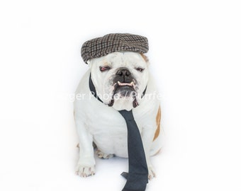 Dapper English Bulldog Print, Fine Art Photography Print, Purrfect Pawtrait Pet Photography, Animal Photography