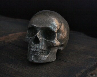 Yorick Full Skull with Latin Inscription