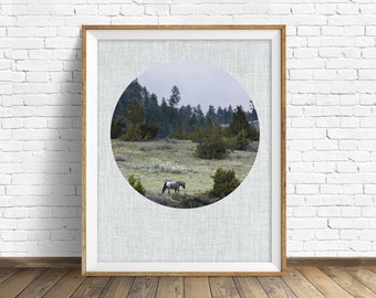 "landscape, woodland, nature, photography, instant download printable art, printable art, large art, large wall art, print, horse -""Wanderer"""