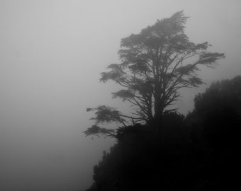 Old Grey Tree   Black and White Photography   Fine Art   Photo   Fog Mist   Mystic Shadow Enchanted Silhouette   polychromatophil  