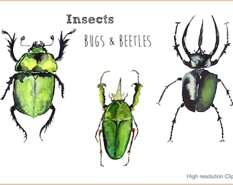 Beetles & Bugs Watercolor Clipart-Scapbooking-Instant Download