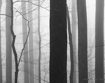 black and white photography, landscape photography, tree photography, trees in fog, forest photography, woodland, fog, trees