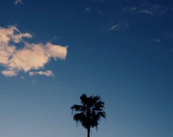 Venice Palm