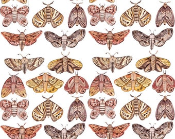 Moths and Moths - Ceramic Waterslide Decal - Enamel Decal - Fusible Decal - 103092