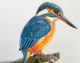 Kingfisher Drawing-colored pencil original