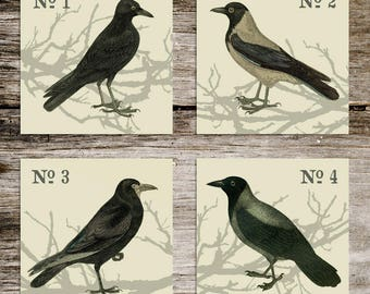 Antique Style Blackbird Print Set from Curious London