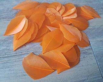 1 orange 5-6cm high