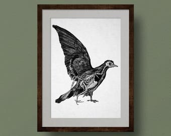 Bird Skeleton Anatomy Print, Pigeon, from Original Ink Drawing. Scientific Illustration, Zoology, Bones, Life Science, Biology, Wall Art.