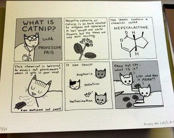 What Is Catnip? - Limited Edition Hey Pais Print