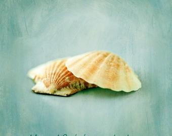 GET 20% OFF TODAY! Seashell Still Life No. 3 -  Art Photography & Home Decor,  Wall Art,  Nature, beach, seashells, ocean, blue