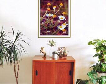 Flower Wall Art Prints, Purple and Yellow Wall Art, Flower Photography Print, Purple Wall Art, Camomile, Purple Bedroom Wall Decor