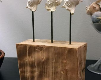 Nautical Decor - Mounted Seashells on Reclaimed Wood