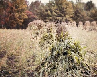 Autumn Farmhouse Decor, Amish Corn Shocks Photography, Fall Landscape Picture, Fall Decor, Rustic Home Decor, Country Home Decor, Cornfield.