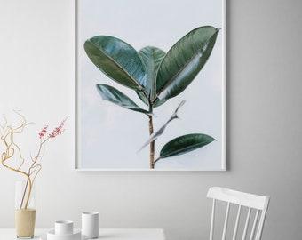 Ficus Elastica Print Design 3, Instant Download, Digital Print, Ficus, Rubber Fig Plant Poster, Indian Rubber Bush Photography