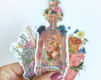 Colorful Anatomy stickers set, Flowery Body Girl, Pink Heart and lungs Study laptop stickers,Decal sticker,  feminist STC012