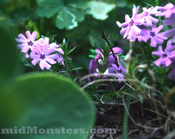 Timid Monsters in the Wild - Ruberick - 5x7 Photography Print