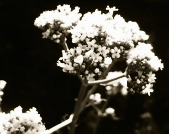 B+W Floral V