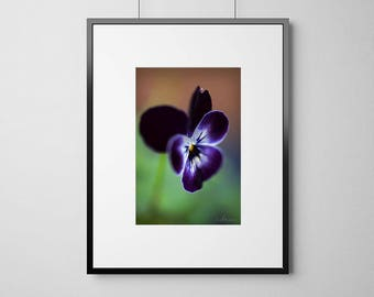 Pansy Print, Purple and Green Wall Art, Macro photography