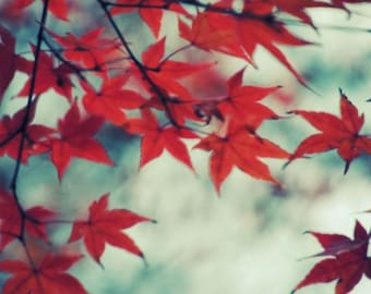 Autumn Photograph - Maple Tree - Red Leaves - Red Autumn - Nature Art - Fall Foliage - Elegant Red - Wall Decor - Nature Photograph