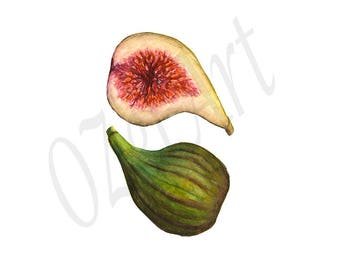 Fig Fruit Organic Tropical Healthy Digital Download Art Still Life Watercolor Painting Printable Art Illustration Home Wall Kitchen Decor