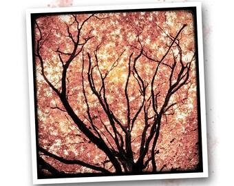 Rose foliage - Brocéliande - art photo signed 20 x 20 cm