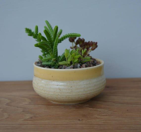 plante grasse vase
