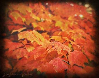 Autumn Nature Photography - Fiery Leaves - 8 x 10 fine art print - autumn fall leaves orange yellow gold ttv black wall art home decor