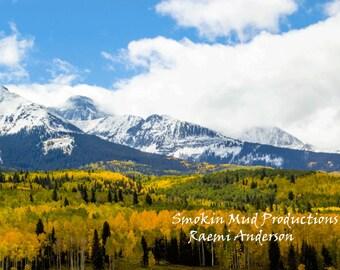 Aspen Tree Print, Aspen Tree Art, Giclee Print, Autumn Photograph, Autumn Photo on Watercolor Paper Print, Original Photograph Print, Aspen