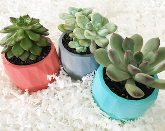 Mini Planters Gift Set of 3 | Geometric Mini Succulent Planters | Perfect for Home and Office Decor | Great Gift | Designer | Plant Lady