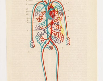 Anatomy art blood guts Medical Diagrams illustrations Anatomy Print