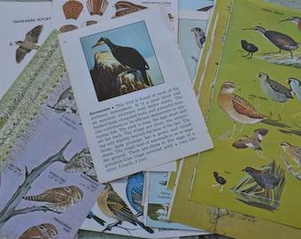 Vintage Bird Nature Paper Ephemera Scrapbooking Mixed Media - Lot of 20