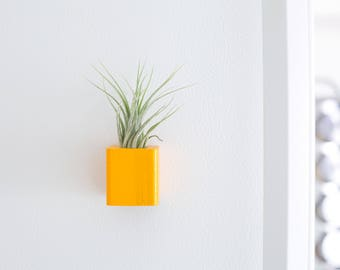 Orange Air Plant Magnet, Colorful Magnets, Kitchen Magnet, Plant Magnet, Air Plant Holder, Small Dorm Gifts, Mini Indoor Plant, Party Favors